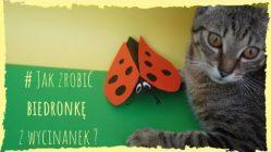 biedronka z papieru - kot z biedronką - wycinanki dla dzieci